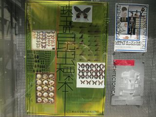 珠玉の昆虫標本(東京大学総合研究博物館)【東京考察#346】